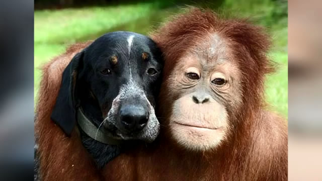 15 Bizarre Animal Friendships