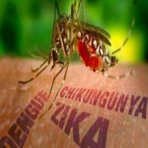 练习 | The First Case of the Zika Virus Transmitted by Local Mosquitoes in Florida
